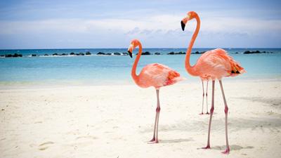 Karibienkryssning till ABC-öarna